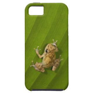 Dink frog (Eleutherodactylus diastema) on a leaf iPhone 5 Cases