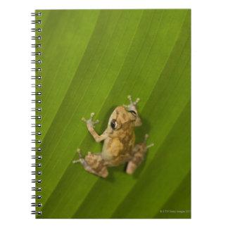 Dink frog (Eleutherodactylus diastema) on a leaf Notebooks
