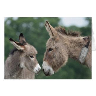 Dinky donkey card