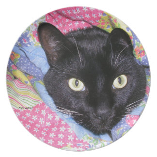 Dinner Plate: Funny Cat wrapped in Blankets Party Plates