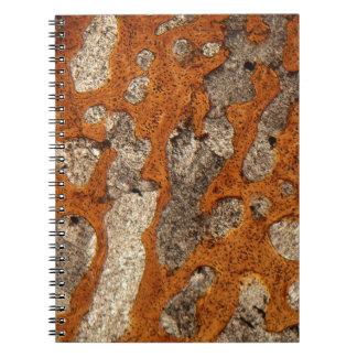 Dinosaur bone under the microscope notebooks