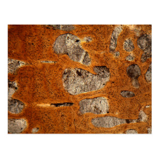 Dinosaur bone under the microscope postcard