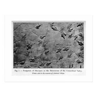 Dinosaur footprints art postcard