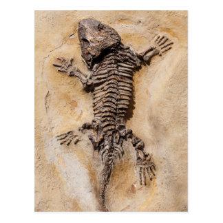Dinosaur Fossil Postcard