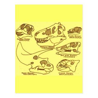 Dinosaur Skulls Post Cards