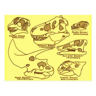 Dinosaur Skulls Post Card