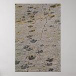 Dinosaur Tracks Print