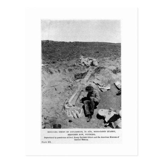 Diplodocus dinosaur dig art postcard