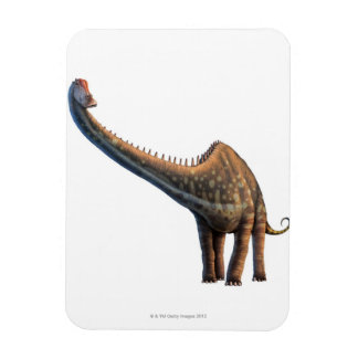 Diplodocus Rectangular Photo Magnet