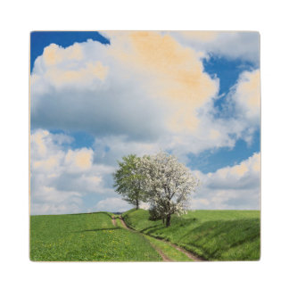 Dirt Road and Apple Trees Wood Coaster