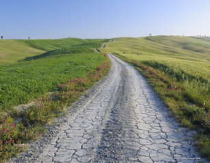 Image result for dirt road through fields