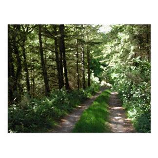 Dirt Track Through Trees. Postcard