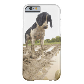 Dirty dog looking at tennis ball in mud barely there iPhone 6 case