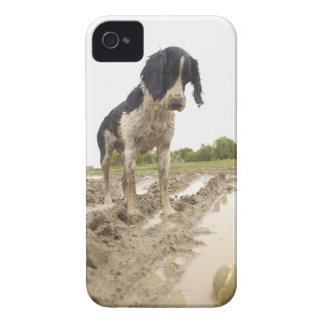 Dirty dog looking at tennis ball in mud Case-Mate iPhone 4 case