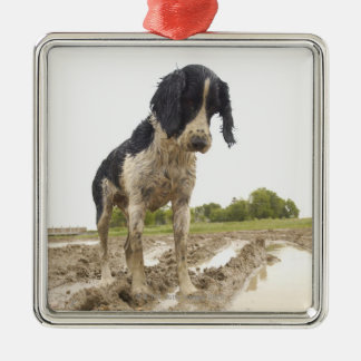 Dirty dog looking at tennis ball in mud christmas ornament