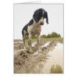 Dirty dog looking at tennis ball in mud greeting card