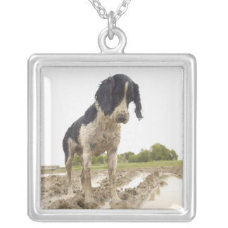 Dirty dog looking at tennis ball in mud silver plated necklace