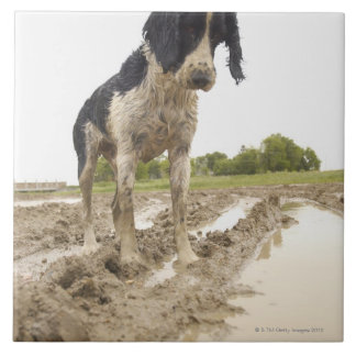 Dirty dog looking at tennis ball in mud tile