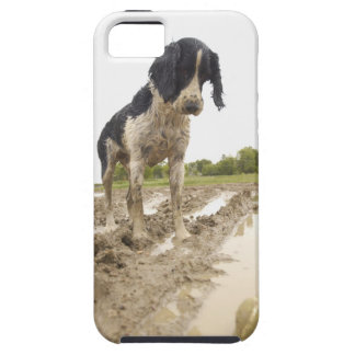 Dirty dog looking at tennis ball in mud tough iPhone 5 case