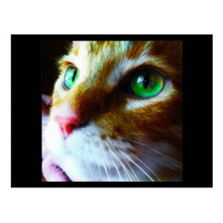"""Disco Says Hi"" Cute Cat Postcard"