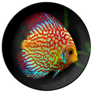 Discus aquarium fish decorative plate