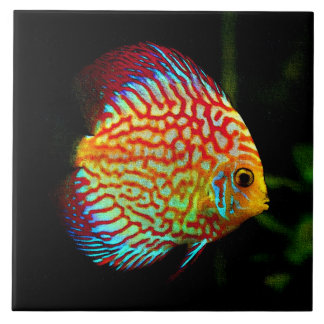 Discus aquarium fish decorative tile