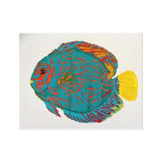 Discus fish print