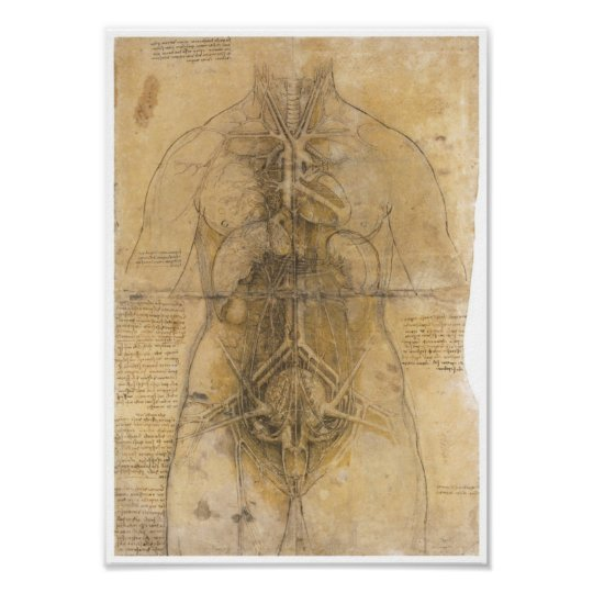Dissection of the organs of a woman, Da Vinci Poster