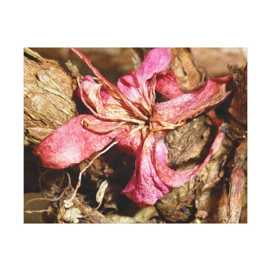 Distinctive close-up photo pink blossom canvas print