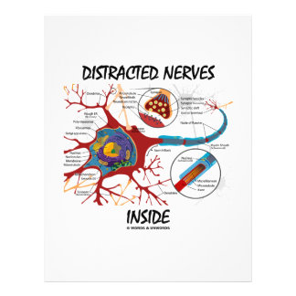 Distracted Nerves Inside (Synapse) 21.5 Cm X 28 Cm Flyer