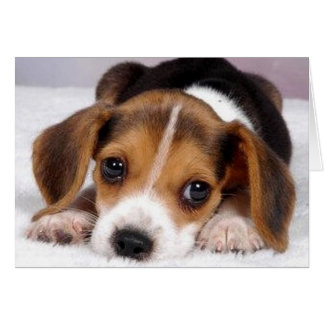 Ditzy Dogs Beagle Greeting Card