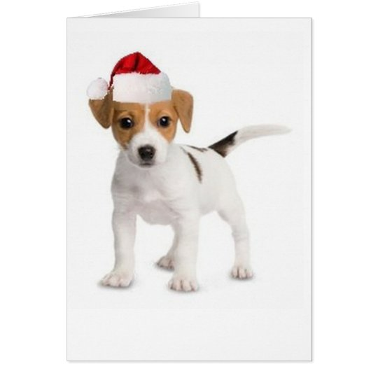 Ditzy Dogs~Original Greeting Card~Jack Russell Card