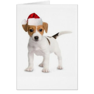 Ditzy Dogs~Original Greeting Card~Jack Russell Greeting Card