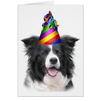Ditzy Dogs Original Notecard Border Collie B day Greeting Cards
