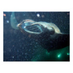 Dive with the Manta Rays -The Big Island Poster