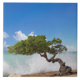 Divi Divi Tree, Eagle Beach, Aruba, Caribbean Large Square Tile