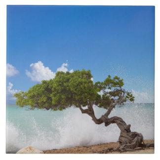 Divi Divi Tree, Eagle Beach, Aruba, Caribbean Large Square Tile