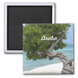 Divi Divi Tree in Aruba Magnet