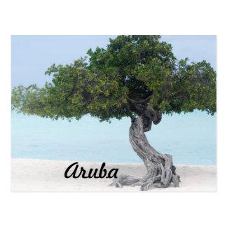 Divi Divi Tree Postcard