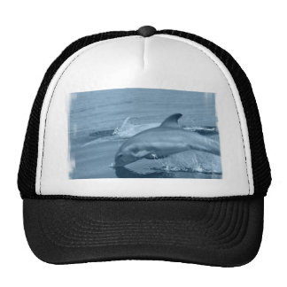 Diving Dolphin Baseball Hat