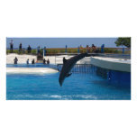 Diving Dolphin Photo Greeting Card