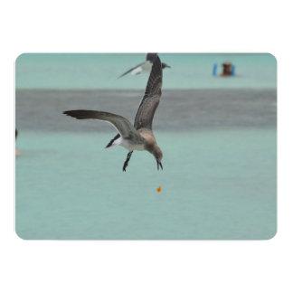 Diving Sanderling Bird Custom Invite