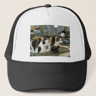 Dixie and Cats Trucker Hat