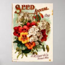 DM Ferry Vintage Flower Catalogue Advertisement