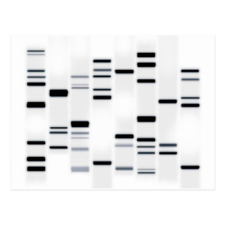 DNA Code Art Black on White Postcard