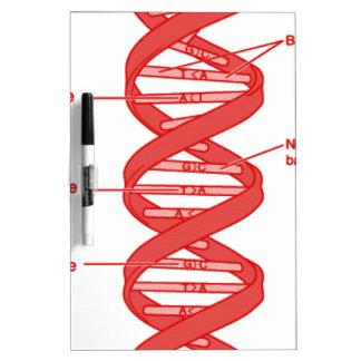 DNA DRY ERASE BOARD