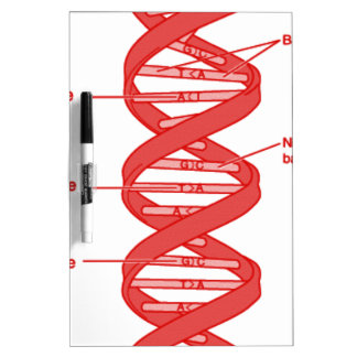 DNA DRY ERASE WHITEBOARDS