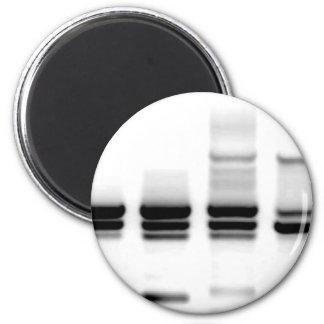 DNA Gel 6 Cm Round Magnet