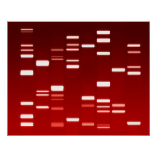 DNA Genetic Code Red Poster