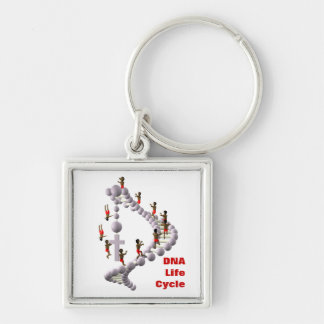 DNA Life Cycle Key Chains
